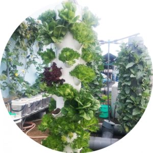 tháp trồng rau