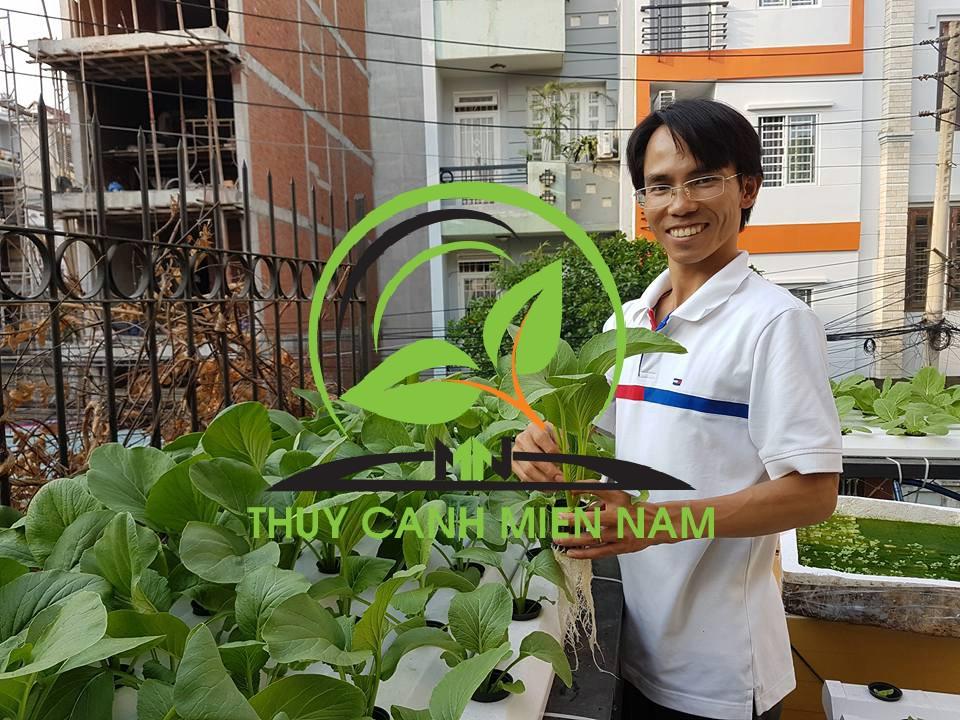 Giàn trồng rau thủy canh đến ngày thu hoạch