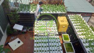 trồng rau thủy canh quận 2
