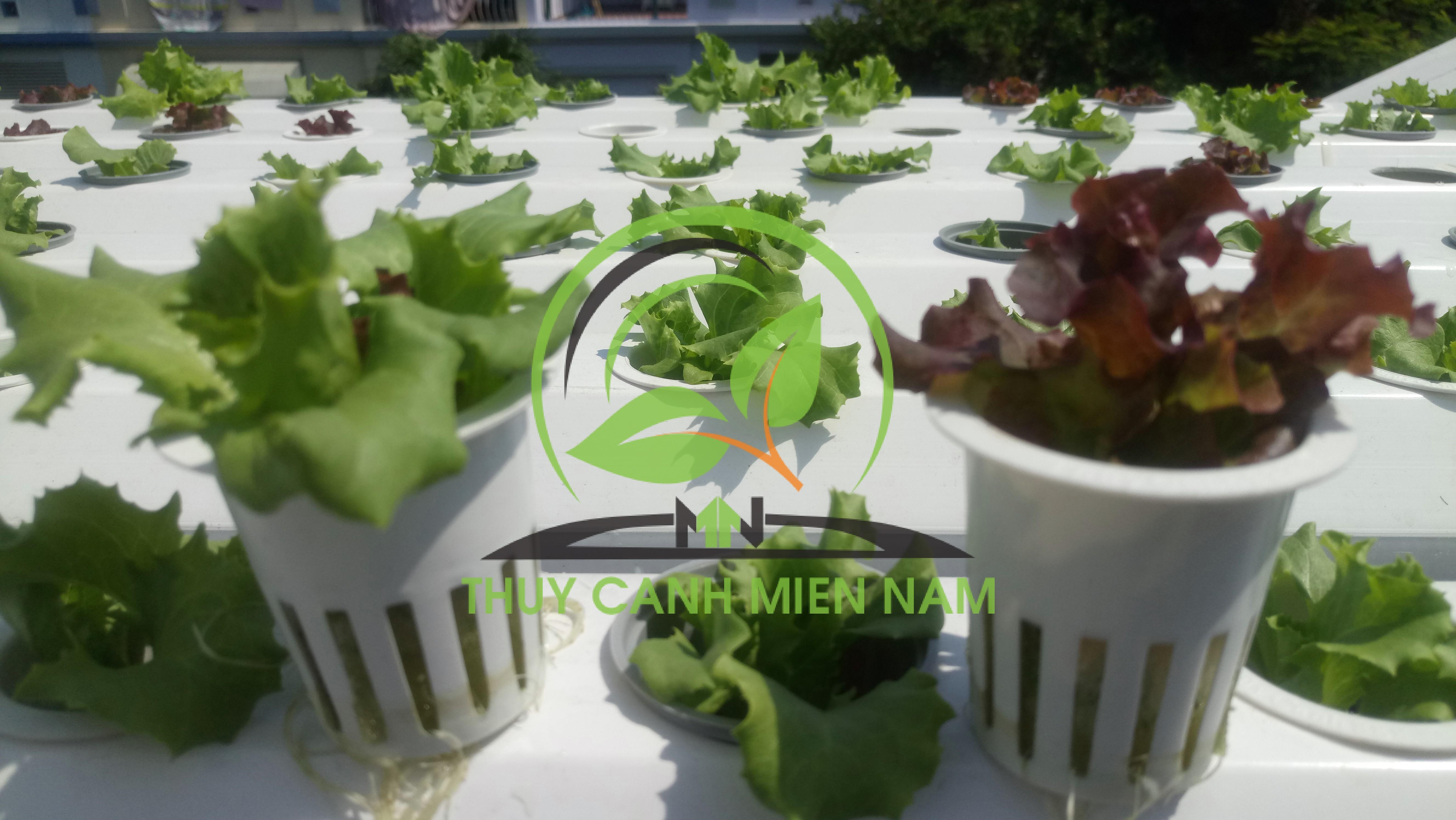 rọ trồng rau thủy canh
