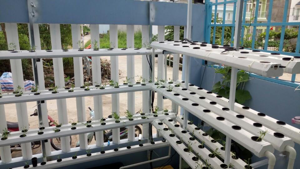 trồng rau thủy canh quận 9