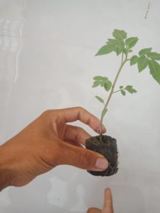 giá thể xơ dừa-giá thể trồng rau thủy canh