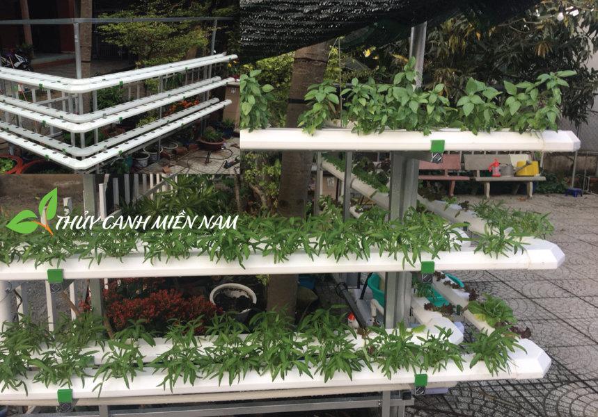 mô hình trồng rau thủy canh áp tường