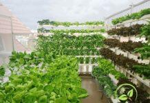 Chi phí đầu tư trồng rau thủy canh. Chi một lần là đủ!