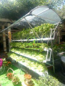 ống trồng rau thủy canh