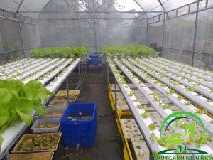 vườn rau thủy canh