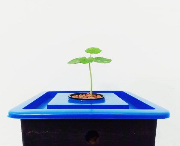 thùng thủy canh cây ăn trái