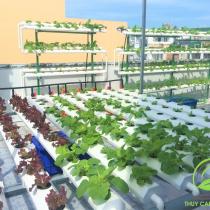Vườn rau mini farm thủy canh