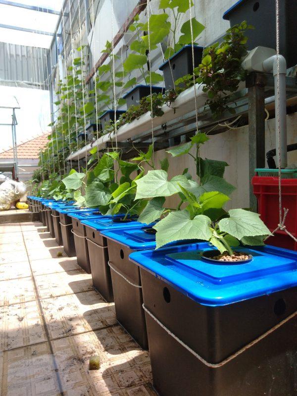 Bộ thủy canh tĩnh trồng rau ăn trái