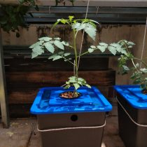 thùng thủy canh tĩnh trồng rau ăn trái