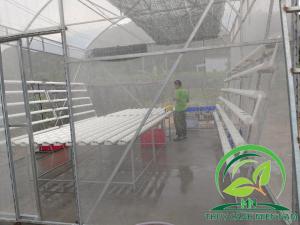 Vườn rau mini farm cô Tư