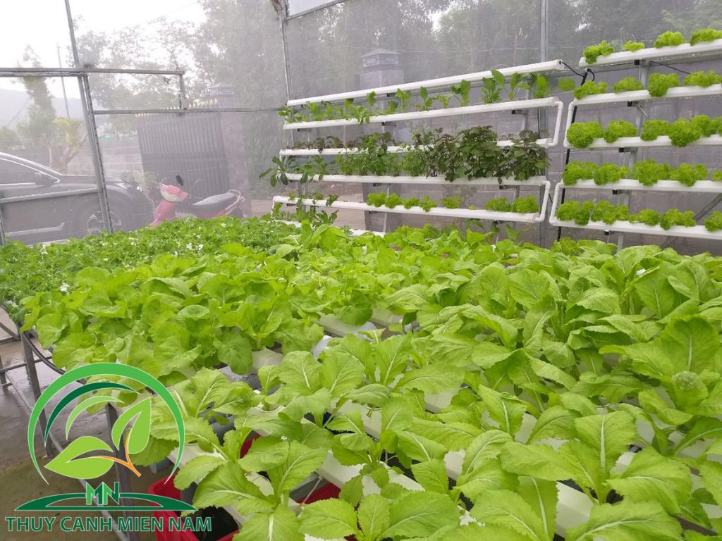 Vườn rau nhà cô Tư Tây Ninh
